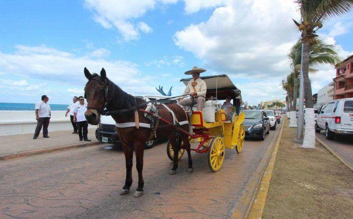 Otorgan 180 días para retirar caballos de calesas en Cozumel
