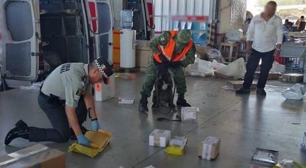 Decomisan marihuana en paquetería del Aeropuerto de Mérida