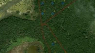 Photo of Rechaza Semarnat proyecto de ecoturismo en la selva de Quintana Roo