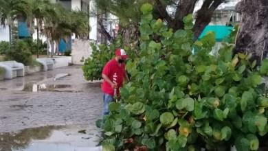 Photo of Atiende Parques y Jardines áreas verdes de Isla Mujeres