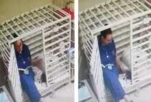 Photo of Captan a veterinaria leyendo cuento a perrito; video enternece a las redes
