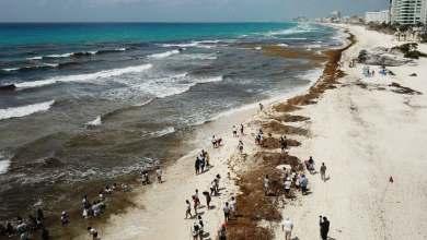 """Photo of Terminó la """"Operación Sargazo 2020"""" en Quintana Roo: se recolectaron más de 17 mil toneladas"""