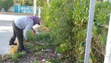 Photo of Mantiene Parques y Jardines en óptimas condiciones áreas verdes de Isla Mujeres