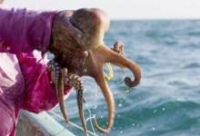 Photo of En 10 años, esta es la peor temporada de pesca en Yucatán
