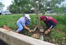 Photo of Reforestación y limpieza; pone en marcha Laura Beristain dos programas tras paso de huracanes