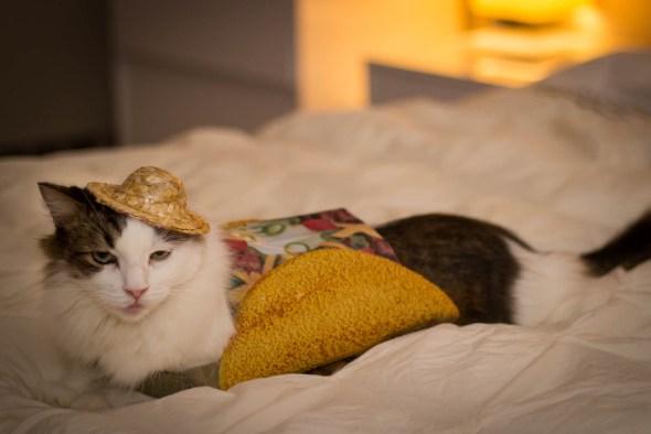 Obligatory Cat Tax.