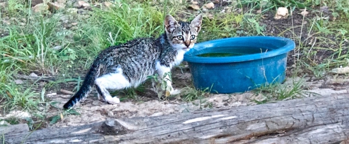 "Feral Cat Fridays: Chessie Asks ""Who's Chester?"""
