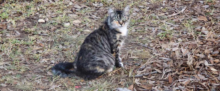 Feral Cat Fridays: Harley Lovers Are Loyal