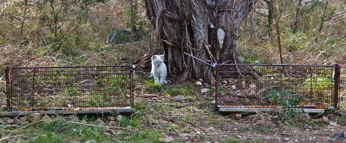 Feral Cat Fridays: Cat Trapping 101