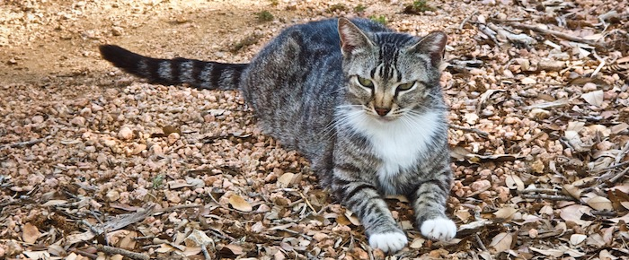 Feral Cat Fridays: Meet Mr. Wally – You'll Be Glad You Did