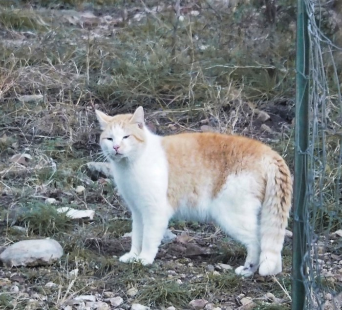 Feral cat gives a quiet warning