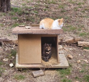 Feral cats napping on and in the shelter