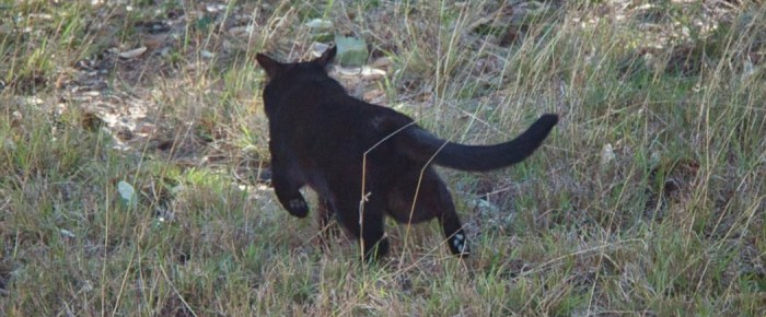 Feral Cat Fridays: Looking Back