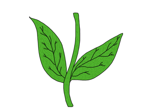Flower with Stem Drawing