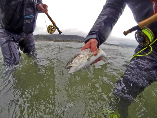 Bull trout fly fishing saltwater