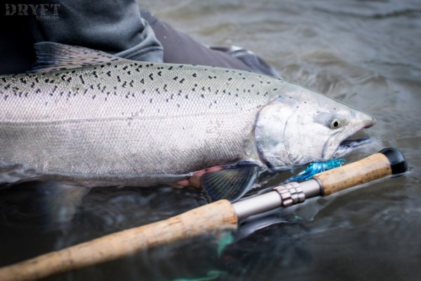 Spring chinook on the fly
