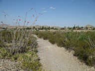 """not thinking of El Paso's agenda of 2""""-6"""" caliper trees, in double rows on 20-30' centers...or how to turn a desert into a forest everywhere, with loads of water guzzling...green-washing for the desert / plant-challenged"""