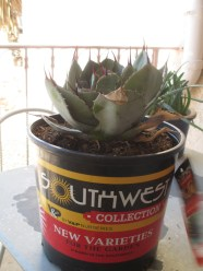fancy nursery sales pots these days