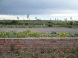 Psilostrophe tagetina with Opuntia...and miles of a ranch beyond