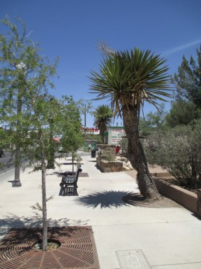 even Yucca faxoniana as street trees...yes!