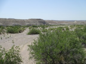 Tornillo Creek...again, more of an arroyo...remember which tree is a tornillo?