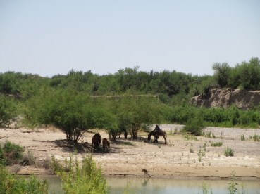 a classic scene...men under the shade of a grove of Acacia farnesiana or Huisache trees, on the Mexican side fo the river...I assume they collect from the tip jars