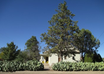 yellow chairs for impact, green cactus hedge, existing trees, and that high desert sky