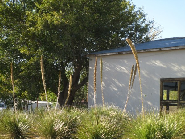 air landscaping west texas
