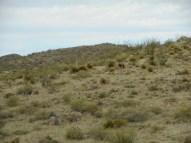 "E of Van Horn TX - 12"", desert grassland, foothills"