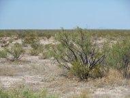 "Fort Stockton TX - 14.4"", creosote scrub...mountains almost gone"