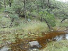 agaves and streams...oh yeah, but this water is a bit grody