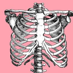 Rib Cage Bone Diagram Wiring Gfci Backwards 3 Yoga Poses For Thoracic Spine Mobility  Mindful Mvmnt