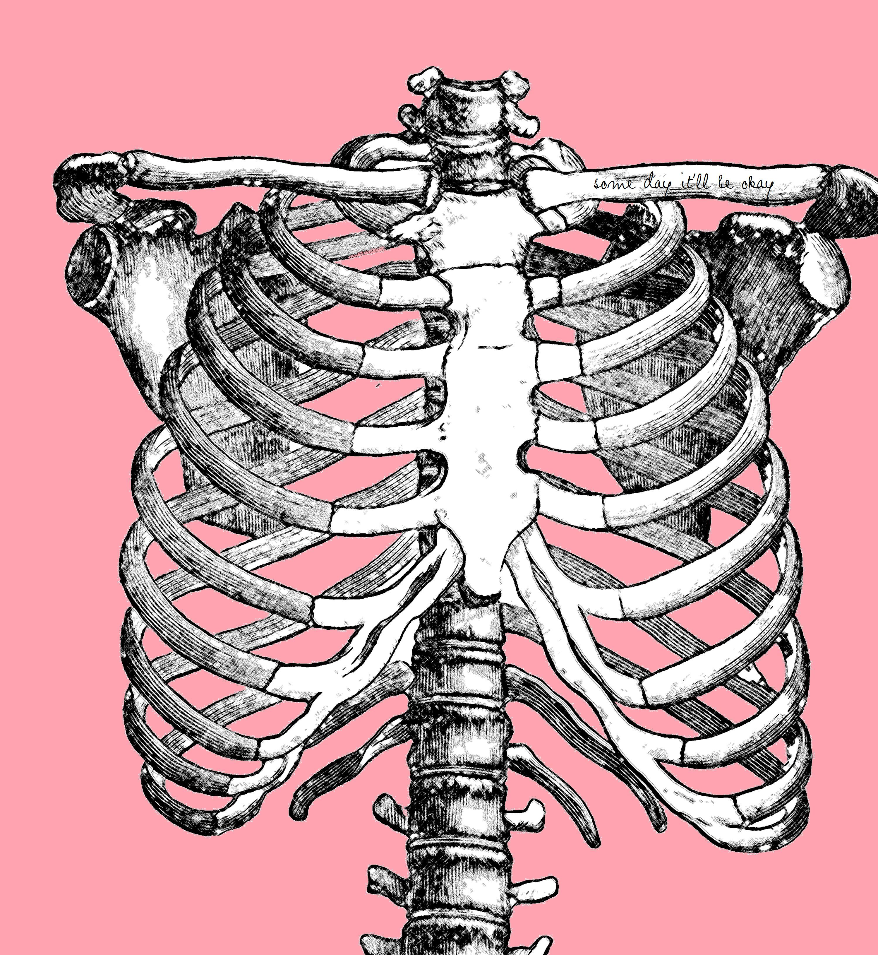 rib cage bone diagram wiring for 13 pin caravan socket 3 yoga poses thoracic spine mobility  mindful mvmnt