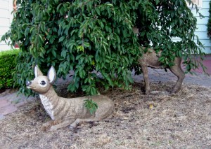 doe, a deer