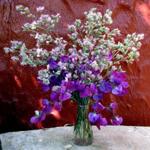 sweet pea and origanum