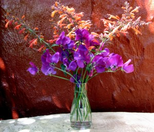 sweet peas and agastache