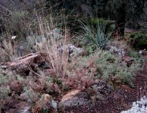 California Fuchsia Planting