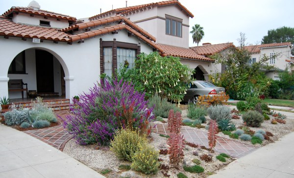 drystonegarden lawn alternatives