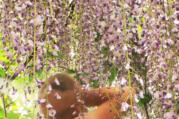 Drystonegarden 187 Garden Bloom Day