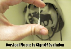 Cervical-Mucus-Is-Sign-Of-Ovulation