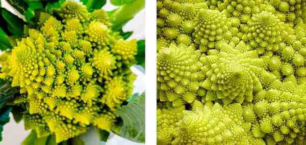 Fractals Brilliant Math & Science Wiki