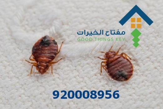 افضل شركة رش البق شرق الرياض 920008956