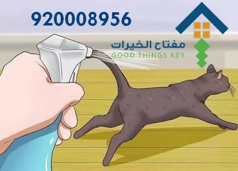 افضل شركة صيد قطط بالرياض 920008956