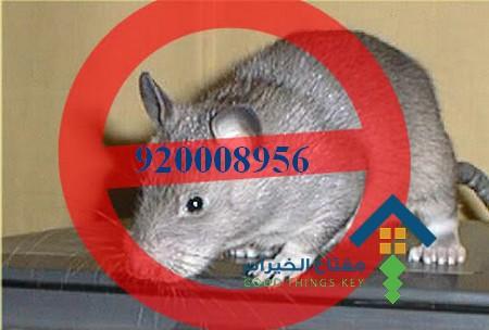 افضل شركة مكافحة الجرذان غرب الرياض 920008956