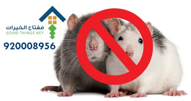 افضل شركة مكافحة الفئران جنوب الرياض 920008956