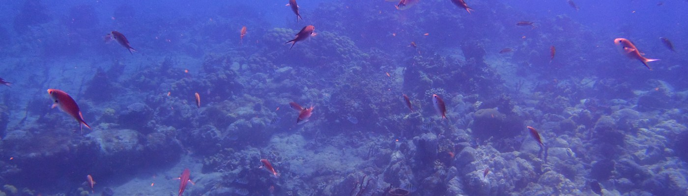 Banc de poisson au Diamant- DSC club de plongée