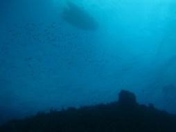 vue de l'arche dans la baie du diamant- DSC club de plongée