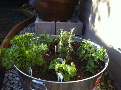 Herb plants day 1