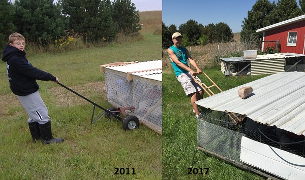 pasture poultry Archives - DS Family Farm