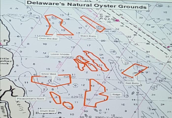 Oyster Stock Status 2018 In The Delaware Bay - delaware-surf-.com on